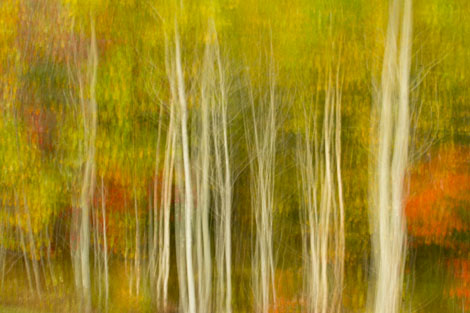 Maine fall color abstract