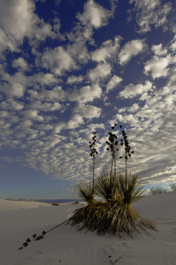 white sands yucca and clouds