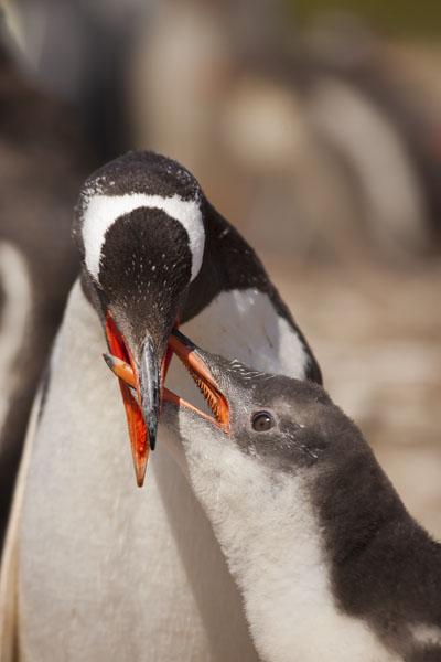 Falkland Islands Photo Gallery